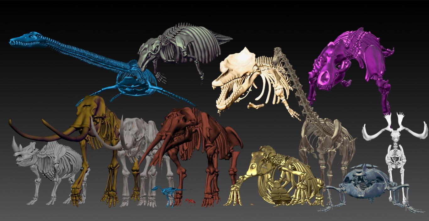 3D骨格国産化石のみ